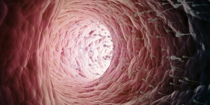droga plemnika w organizmie kobiety