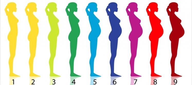rozwój ciąży miesiące